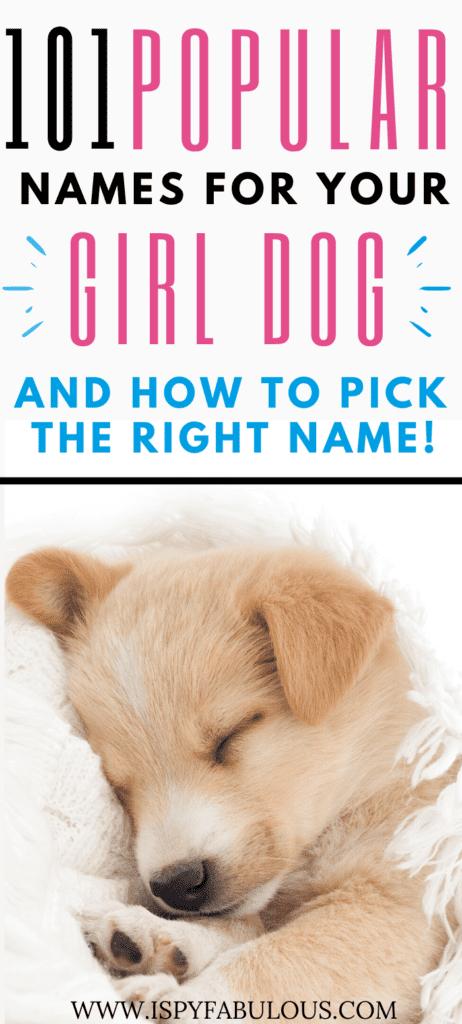 girl dog names